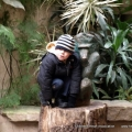 Nov 2008 - Chester Zoo