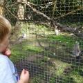Sep 2014 - Lakeland Wildlife